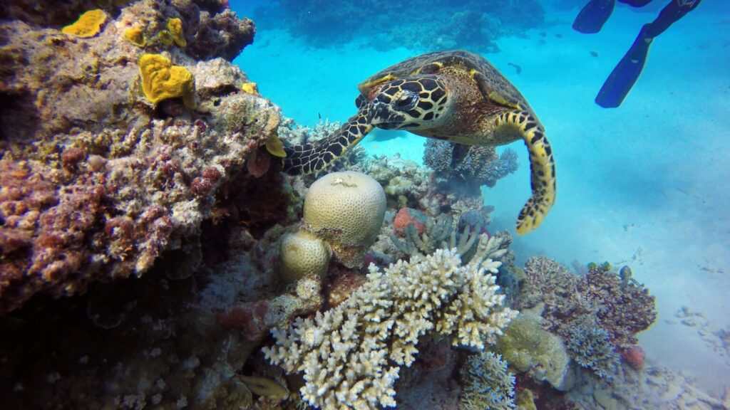 Scuba Diving With Turtle And Reef